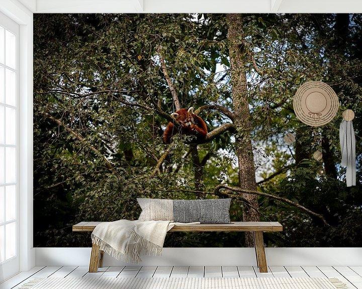 Beispiel fototapete: Ein Roter Panda (Katzenbär) von Jesse Lamberink