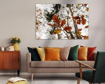 November Leaves van Djuli Bravenboer
