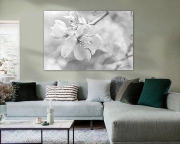 Frühlingsblüte von Violetta Honkisz