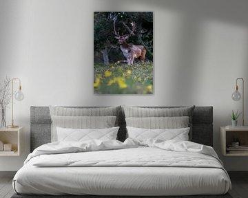 Männlicher Damhirsch mit gelben Blüten im Vordergrund. von Albert Beukhof