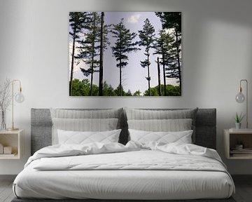 Shooting trees van Jane Lin Ness