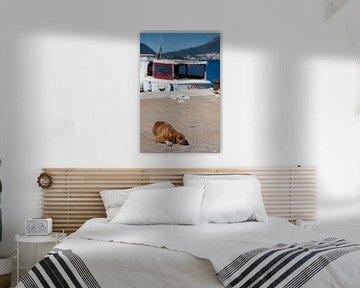 Mittagsschläfchen am Hafen - ein Hundeleben von t.ART