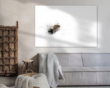 Muisje kijkt vanuit een holletje naar buiten in een besneeuwde wereld.de sneeuw. van Albert Beukhof