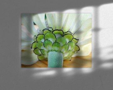 Weiße Blume von Lotte Veldt