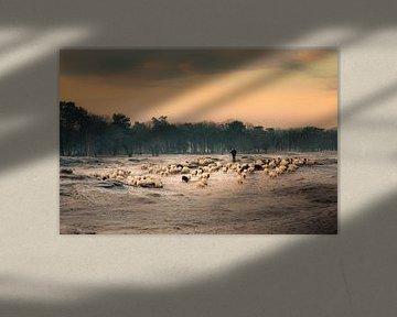 Schafherde auf dem morgendlichen Weg ins Moor von gooifotograaf