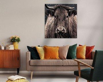 Eine Nahaufnahme oder Kuh B142 von Anna Marie de Klerk