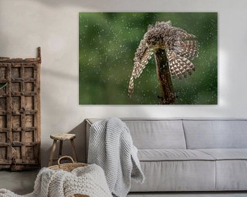 Die Eule nimmt eine Regendusche. von Albert Beukhof