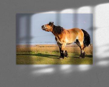 Pferd auf Juist von Dirk Rüter