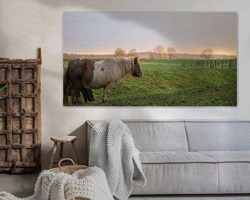 pony op het platteland van Tania Perneel