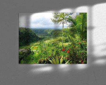 Die schönsten Reisterrassen auf Bali von Thomas Zacharias