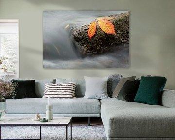 Herfstkleuren von Patrick Brouwers