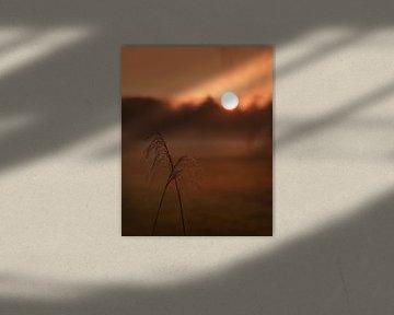 Des panaches de roseaux au coucher du soleil doré sur Mayra Pama-Luiten