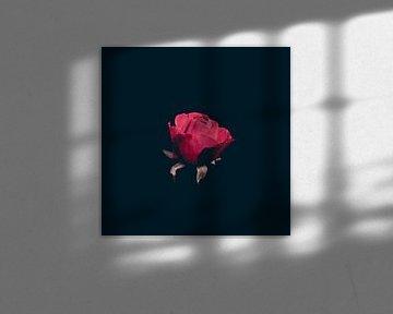 letzte Winterrose von Ribbi The Artist