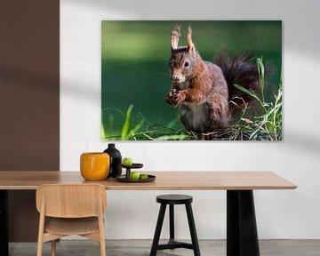 Eeekhoorn