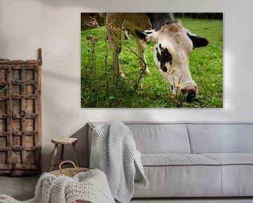 Weidende Kuh von Steven Van Aerschot