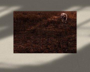 Herbstfotografie von Tieren | Galloway Portraitfotografie | Landschaftsfotografie von Part of the vision
