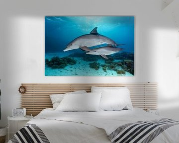 Delfinmutter mit Jungtier von Norbert Probst