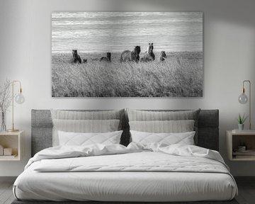 Island Pferde im Feld von Thomas Heitz
