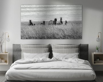 IJslandse paarden in het veld van Thomas Heitz