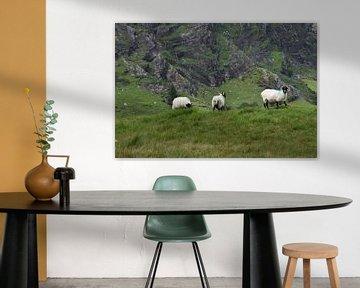 Schafe in den Bergen von Youp Heinhuis