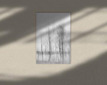 Schemen III, schwarz-weiss von Steffi Hommel