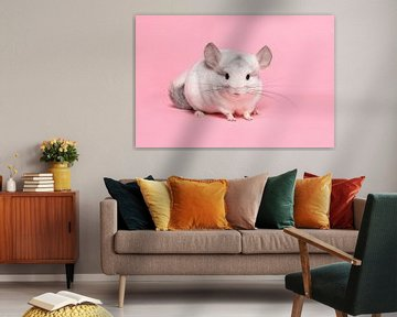 Schattige witte chinchilla op een roze achtergrond van Elles Rijsdijk