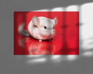 Witte chinchilla op een rode achtergrond van Elles Rijsdijk