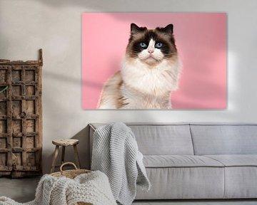 Portret van een ragdoll cat tegen een roze achtergrond van Elles Rijsdijk