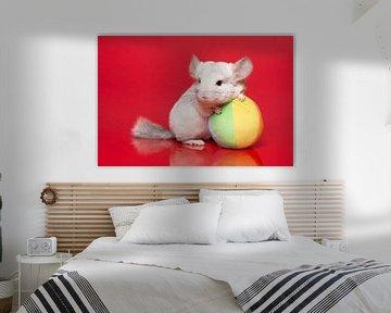 Mignon chinchilla avec boule sur fond rouge sur Elles Rijsdijk