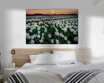 Tulpen bei Sonnenuntergang von Ron ter Burg
