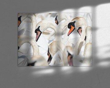 Zwanen portretten van Elles Rijsdijk