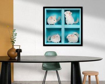 Weißes Chinchilla in einer blauen Box von Elles Rijsdijk