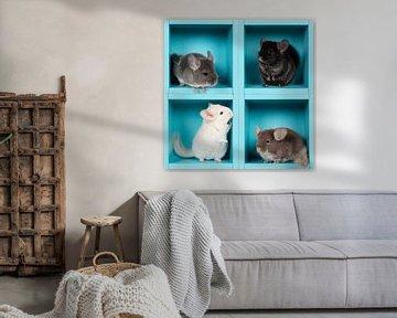 Vier chinchillas in een box van Elles Rijsdijk