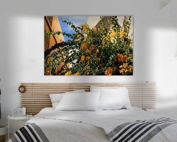 Blühende Pflanze mit leuchtend orangenen Blüten vor Häuserwand und blauem Himmel von Hans-Heinrich Runge