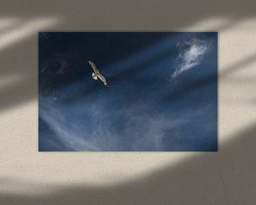 Vrije vogel van Anouschka Hendriks
