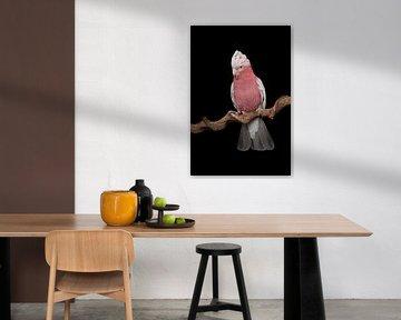 Rosa Kakadu vor einem schwarzen Hintergrund von Elles Rijsdijk