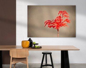 Eine rote Pflanze mit einem unscharfen Hintergrund von Matthias Korn