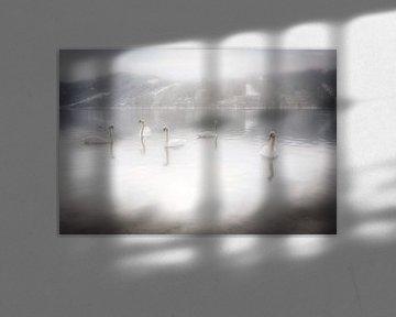 Zwanen op een mooie winter ochtend op de Ossiacher See in Karinthië, Oostenrijk van Bas Meelker