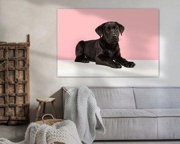 Schwarzer Labrador-Retriever-Welpe liegt auf einer weißen Bank vor einem rosa Hintergrund von Elles Rijsdijk