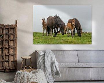 Dartmoor-Pferde mit Fohlen in der englischen Dartmoor-Landschaft von Elles Rijsdijk