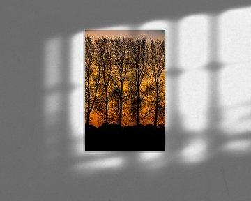 Baumsilhouetten von kahlen Bäumen gegen einen orangefarbenen Himmel von Anne Ponsen