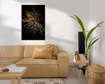Fahne eines Grases in hellen Farben vor schwarzem Hintergrund von Anne Ponsen