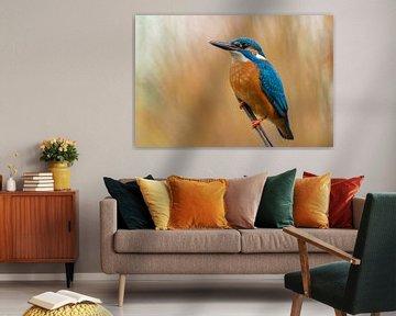Eisvogel von Peter Sneijders