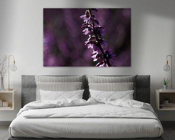 Zweig der Heidekraut gegen lila Hintergrund mit Bokeh von Anne Ponsen