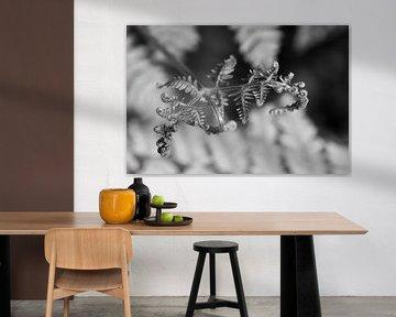 Unfolding Life - Schwarz-Weiß-Fotografie von Qeimoy