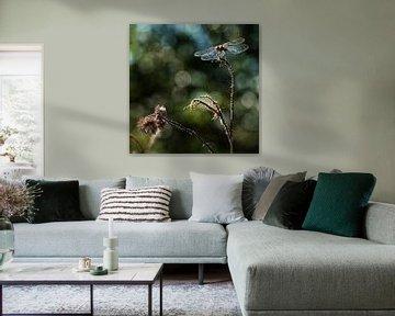 Libelle von Affect Fotografie