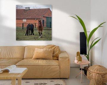 Junge Pferde auf der Wiese im Dezember von JM de Jong-Jansen