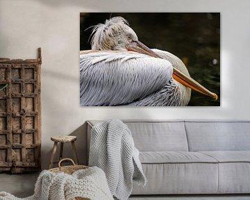Pelikan entspannt am Wasser von Evi Willemsen
