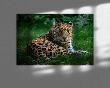 Amurleopard von Evi Willemsen