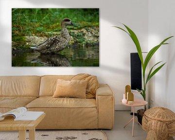 Ente im Wasser stehend von bryan van willigen